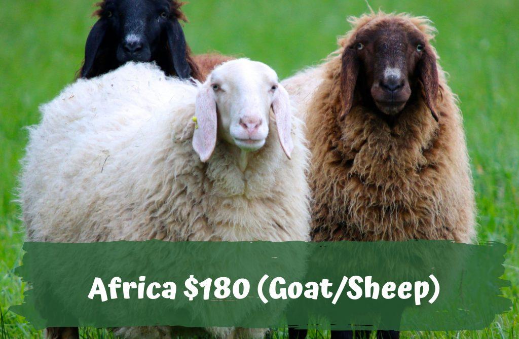 Qurban Korban Singapore Africa $180