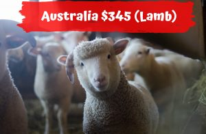 Singapore Korban Qurban Lamb