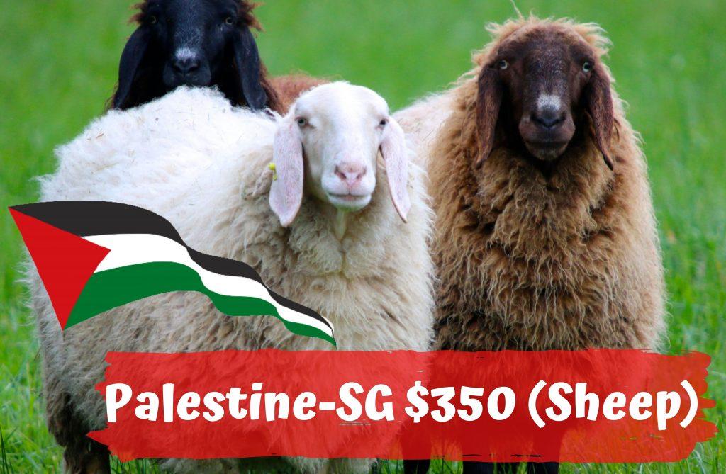 Qurban 2021 Palestine SG $350 Sheep