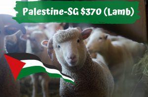 Qurban 2021 Palestine SG $370 Lamb
